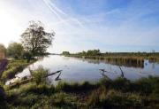 Marais de sacy1